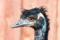 Portrait von einem Emu by mnfotografie