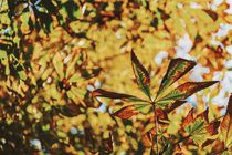 Green And Yellow Autumn Leaves by Radu Bercan