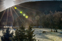 Winterlandschaft mit Pferden by mnfotografie
