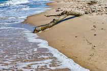 Baumstamm am Strand von mnfotografie