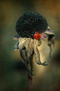 Last Ladybug by Andreas Hoops
