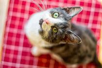 süßes kleines Katzenbaby von mnfotografie