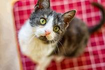 Katze mit grünen Augen by mnfotografie