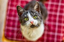Kleine Katze schaut nach oben von mnfotografie