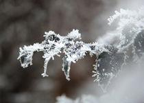 Frost on leaf by Photo-Art Gabi Lahl