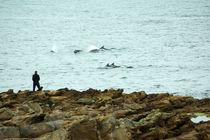 Define vor Tarbat Ness, Dolphins von Sabine Radtke