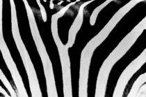 Black And White Zebra Skin Texture von Radu Bercan