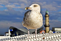 Magic Seagull on the Baltic Sea von captainsilva