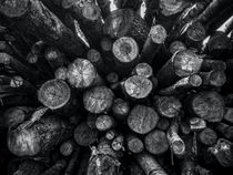 A Pile of Logs von James Aiken