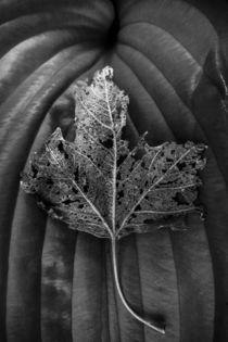 Leaf Variations by James Aiken