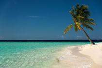 Palm-Beach by Sylvia Seibl