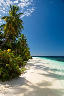 Palm-Beach 2 von Sylvia Seibl