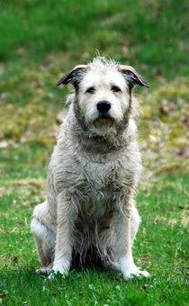 Hund10 von Edmond Marinkovic