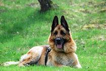 Hund9 von Edmond Marinkovic