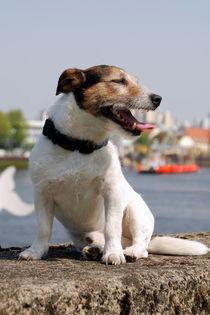 Hund5 von Edmond Marinkovic