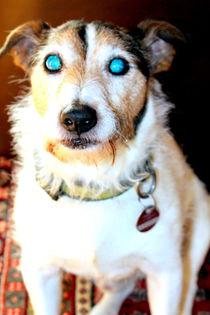 Hund2 von Edmond Marinkovic