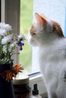 Katze4 von Edmond Marinkovic