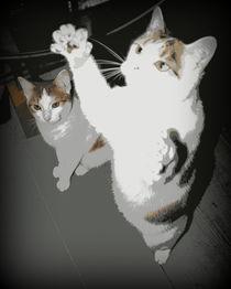 Katzen von Edmond Marinkovic