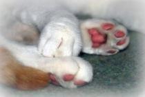 Katzenpfoten von Edmond Marinkovic