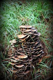 Pilze13 von Edmond Marinkovic
