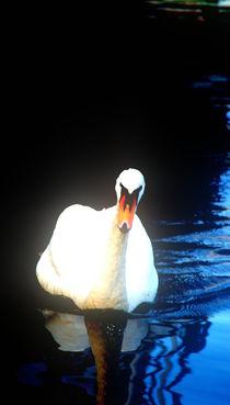 schwan  von Edmond Marinkovic