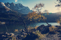 [:] Coloured tree and Zugspitze in Bavaria at lake Eibsee [:] von Franz Sußbauer
