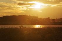 Sonnenuntergang Wieker Bodden Rügen von Rene Müller