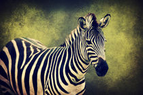 Zebra von AD DESIGN Photo + PhotoArt