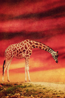 Die Giraffe by AD DESIGN Photo + PhotoArt