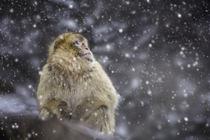 Schneegestöber von anneliese-photography