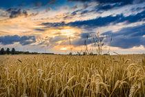 Sonnenuntergang im Kornfeld von Philip Kessler