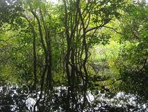 Wasserspiegelung im Amazonas by Klara Latz
