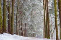 Winterlandschaft by mnfotografie