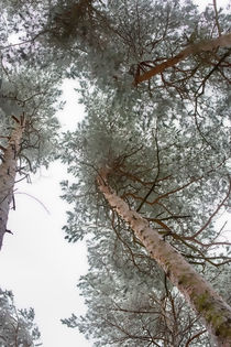Tannenbaum von unten by mnfotografie