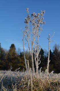 Winterkräuter von Eike Holtzhauer