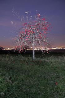 Weihnachtsapfelbaum von Christoph Hermann