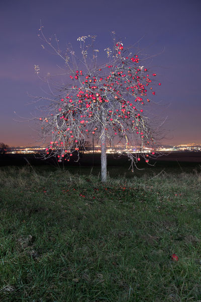 Weihnachtsapfel