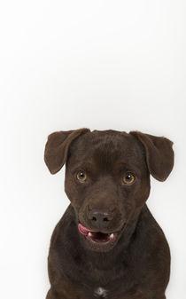 Patterdale Terrier / 3 von Heidi Bollich