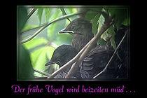 Der frühe Vogel . . . wird beizeiten müd`. . . von mario-s