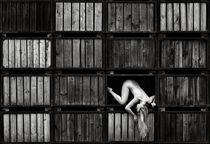 living in a box II von drachenphoto