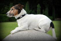 Hund15 von Edmond Marinkovic