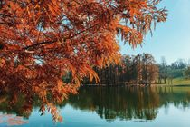 Yellow Autumn Tree On Lake Water With Reflection Background by Radu Bercan