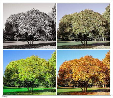 Baum-jahreszeiten-quadrat-tree-times-klein