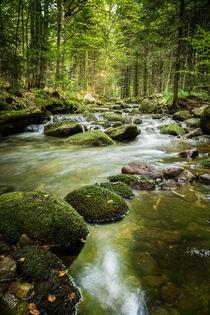 Perspektive Wald by jazzlight