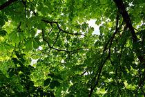 roof with leaf by ewski
