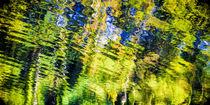 reflections, green von anando arnold