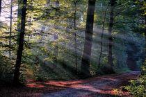 Licht im Wald 4 by Bruno Schmidiger