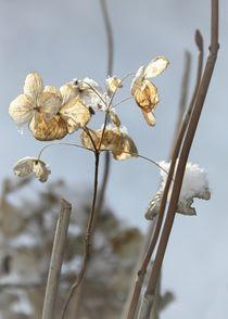 Wintergarten Ikebana by Photo-Art Gabi Lahl