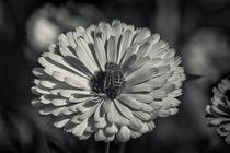 Flora und Fauna by kiwar