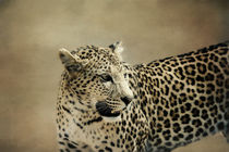 Leopard by Gisela Kretzschmar
